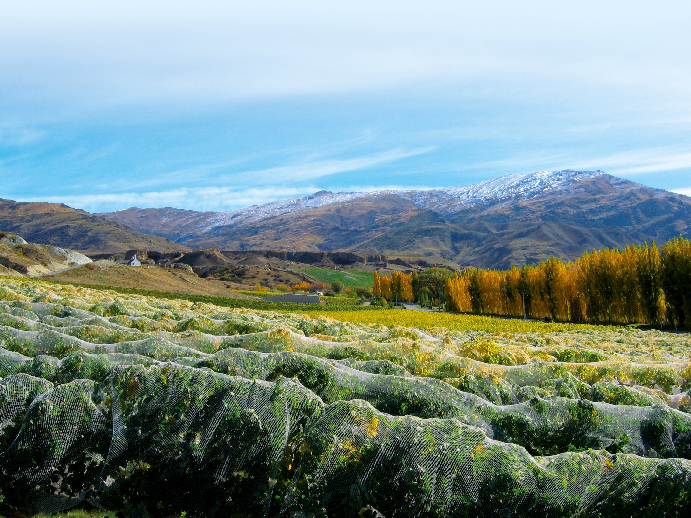 Overlooking the Mt Difficulty in Cromwell, Central Otago