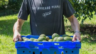 a man from The Avocado People carries a large crate of avocados