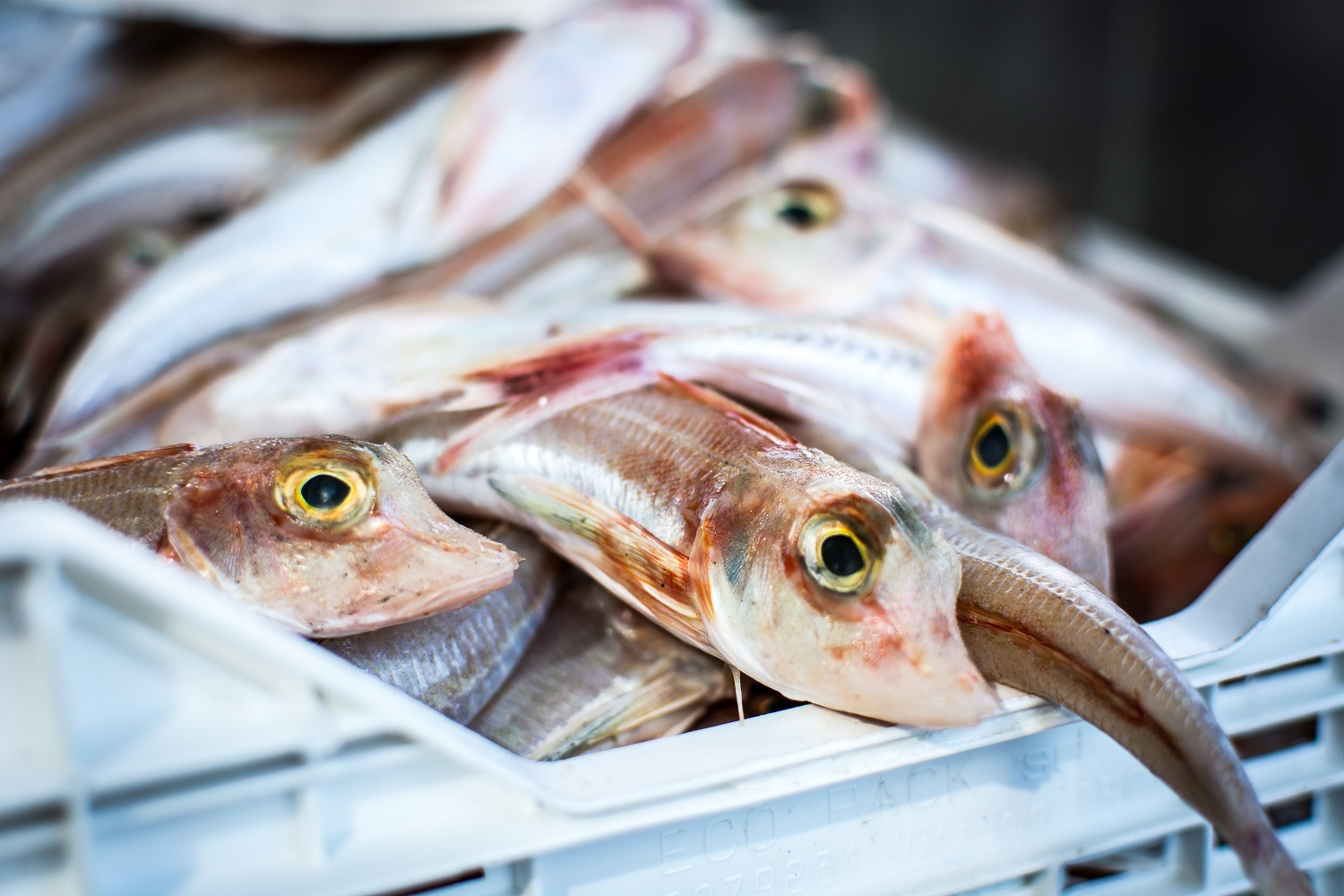 Fish for sale in supermarket