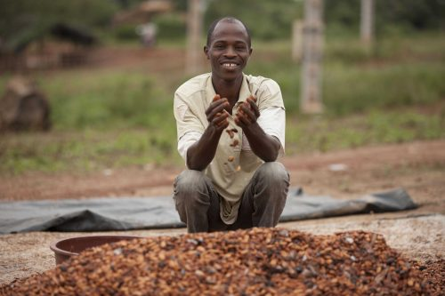 Cocoa farmer holding a handful of cocoa beans