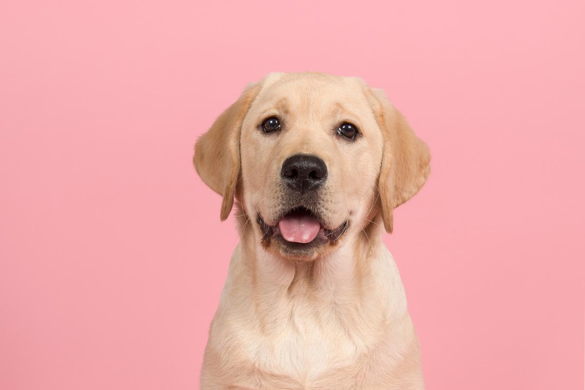New Hypoallergenic Dog Roll Hits Shelves
