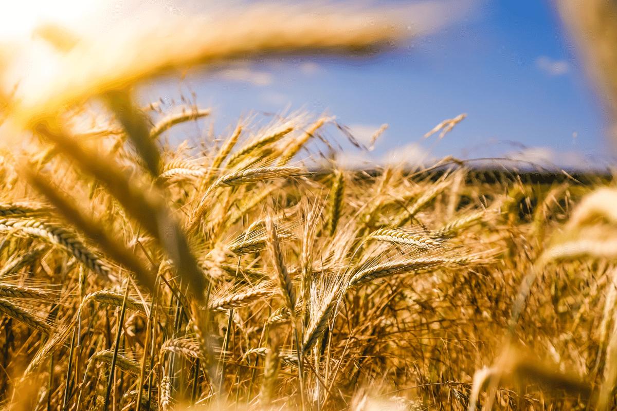 Co-Operative Calls For Board Appointed Farmer Director