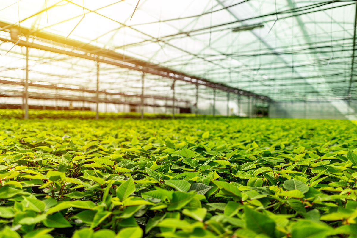 New Charitable Trust for NZ's Horticulture Sector